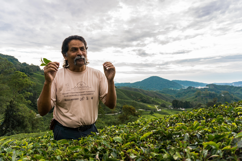 Unser Guide erklärt uns in Mitten der Teeplantagen der Cameron Highlands die Herstellung von Tee