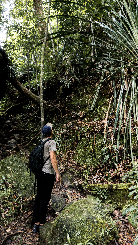 Trail Nr. 3 im Bako Nationalpark