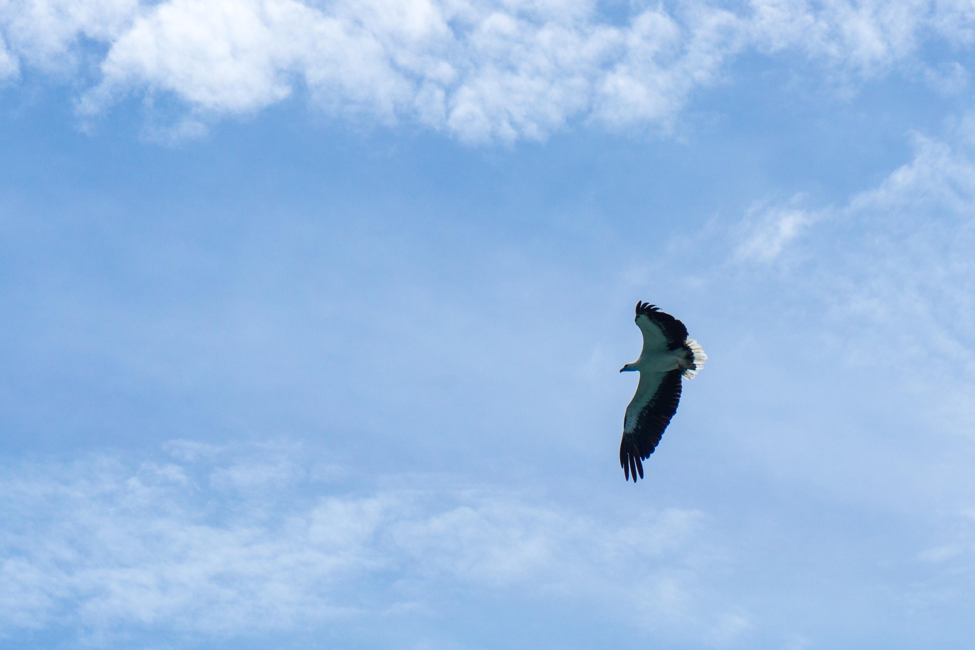 Ein fliegender Adler in der Luft